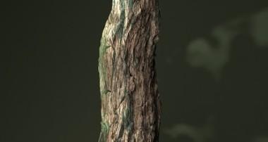 "Blender ""Crack It"" Addon: Making Old Tree With Rough Bark"