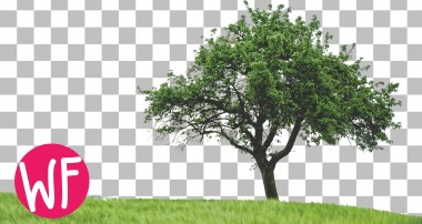 Photoshop Tutorial   How to Cut Out a Tree in Photoshop