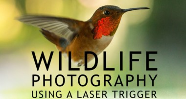 Wildlife Photography Using a Laser Trigger