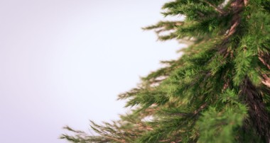 Creating Photorealistic Pine Trees in Blender
