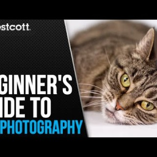 Pet Photography Tips and Techniques