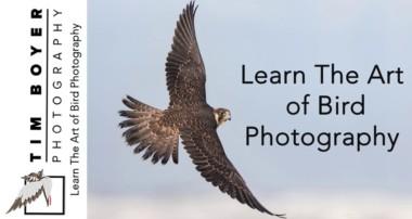 Bird Photography Trailer