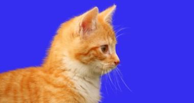 Affinity Photo Tutorial – Katzen – Fell freistellen