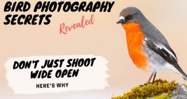 Don't just shoot wide open! Here's Why – Bird Photography Secrets Revealed