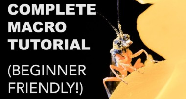 Complete Macro Photography Tutorial for Beginners