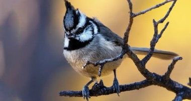 Wildlife Photography Tutorial: How To Photograph Small Birds