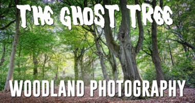 Woodland Photography, The Ghost Tree