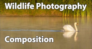 Wildlife Photography Compositional Tips: How I Compose Wildlife Photos